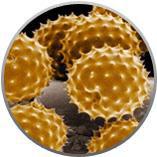 Pollen Pollution